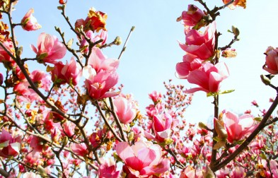 SPRING IS HERE♡